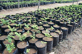 Large number of pots with individual small plants.