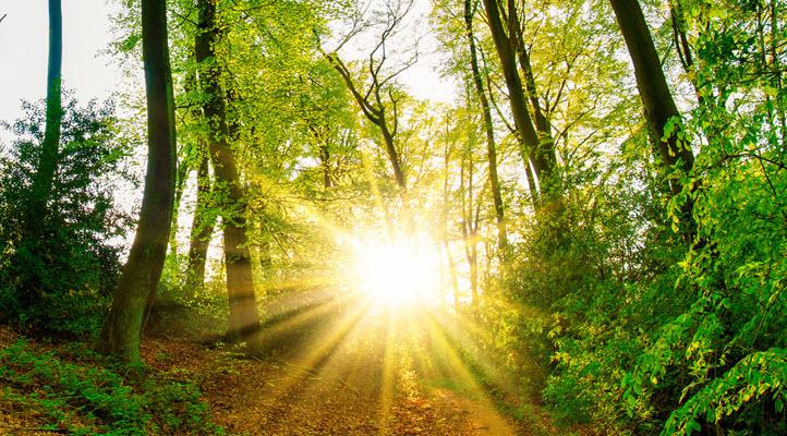 Sunshine through the forest.