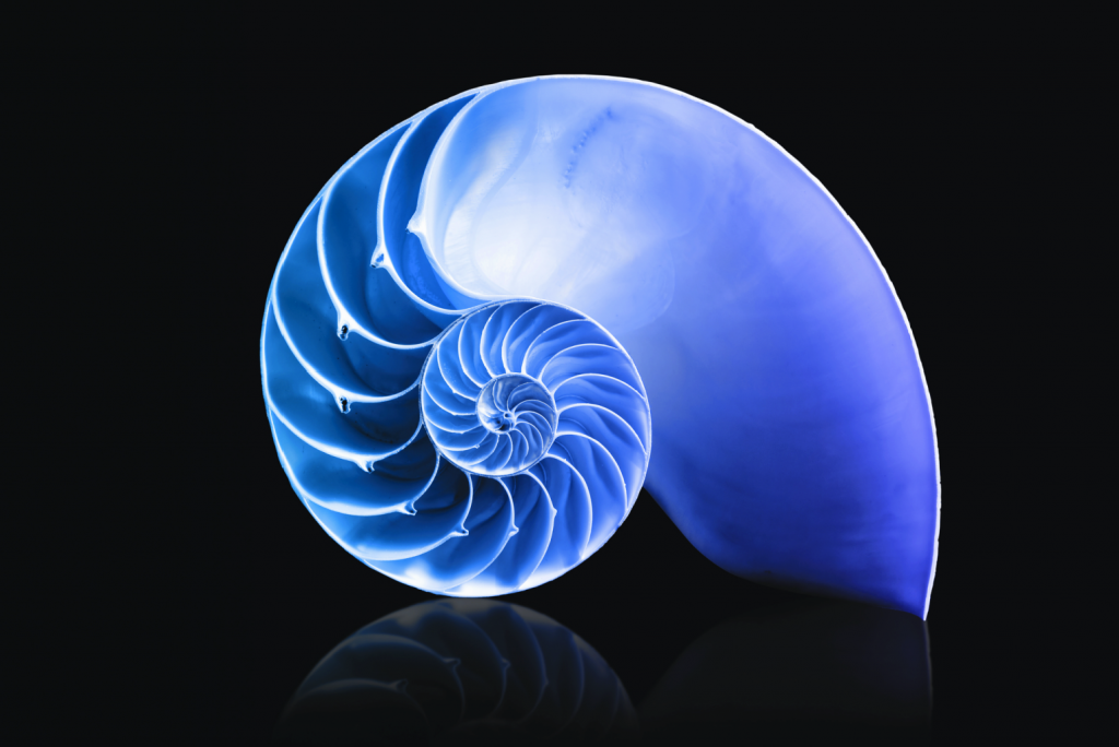Cross section of a spiral shell.