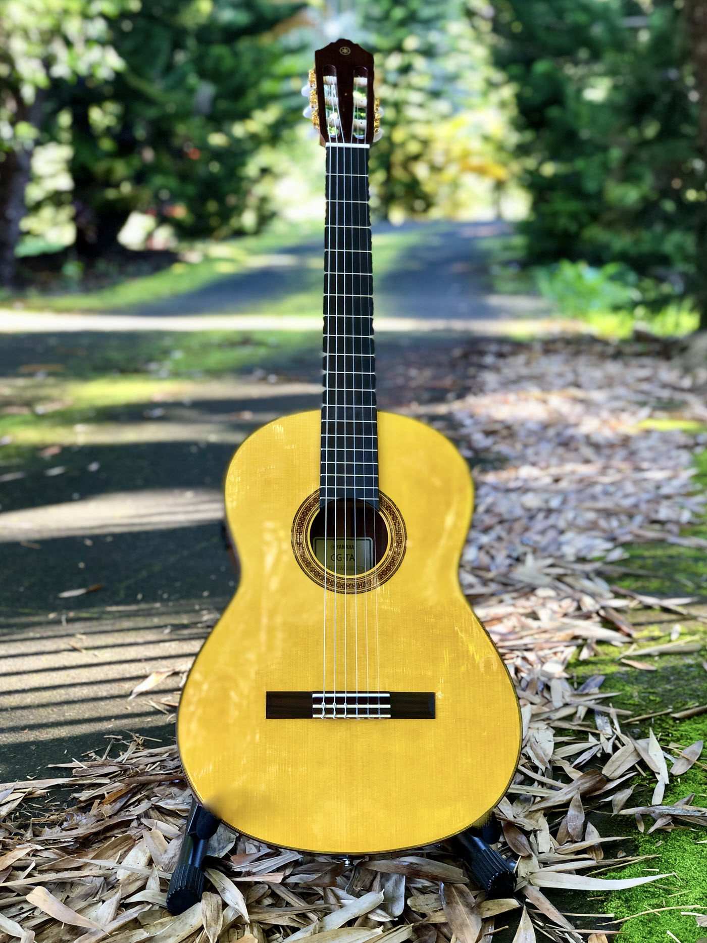 Acoustic guitar in a park setting.